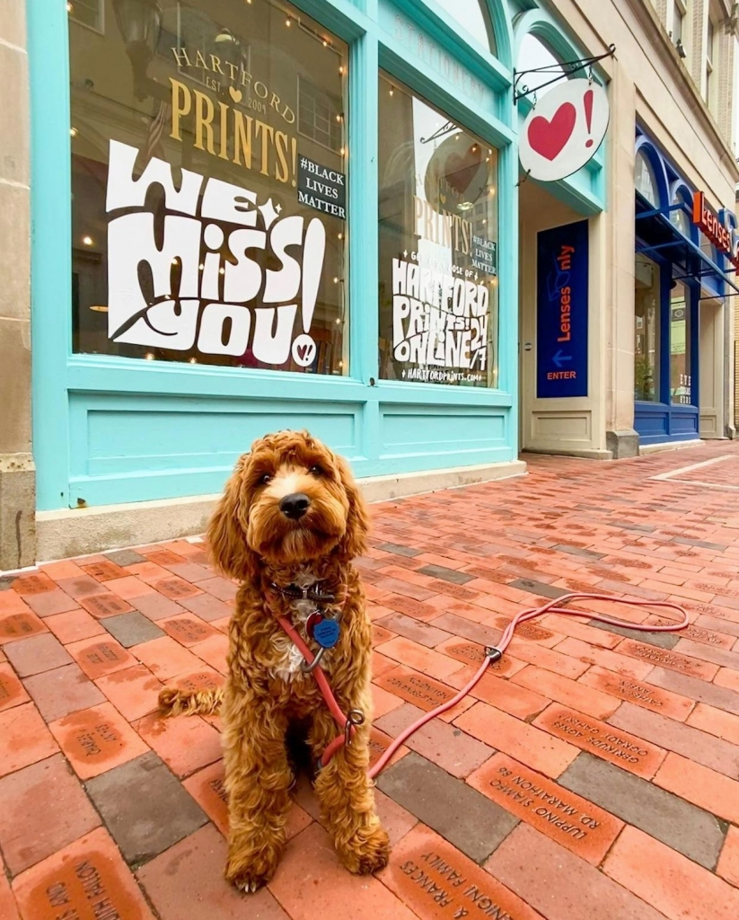 A goldendoodle puppy stands in front of Hartford Prints on Pratt Street.