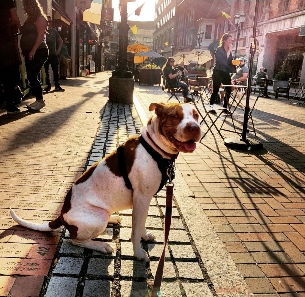 A mid-sized dog sitting on Pratt Street with the sun setting in the background.